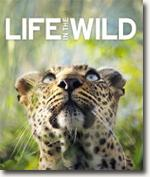*Life in the Wild* by DK Publishing